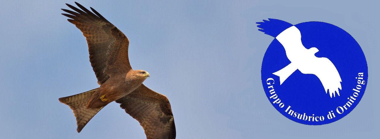 Gruppo Insubrico di Ornitologia (GIO)