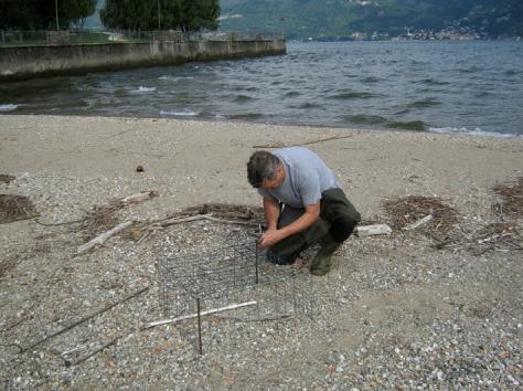 Figura 15: il posizionamento della gabbia il 2 giugno 2014. Foto di Fabio Saporetti